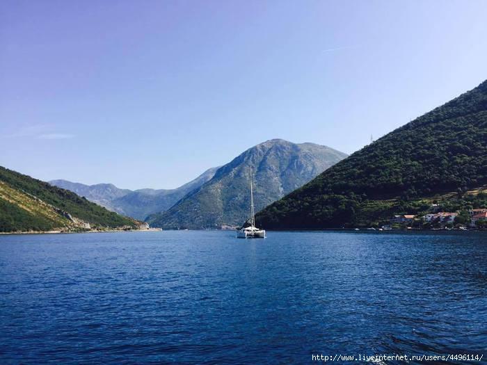 Varning for haj vid kroatiens kust