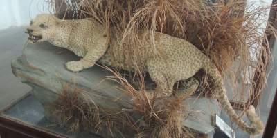 اسماء الحيوانات المنقرضة حديثا في العالم Pivimageskama7